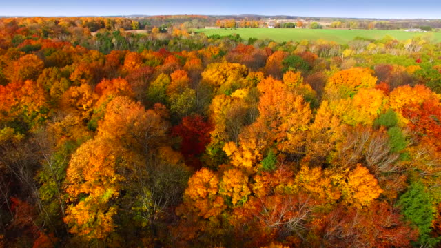 Wisconsin Autumn colors at there very best and brightest video