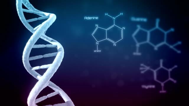 DNA mit Textfreiraum. Endlos wiederholbar. – Video