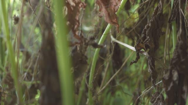 vídeos de stock, filmes e b-roll de folhas murchas e caules de plantas de perto. chegou a hora da morte deles. - sem cultivo