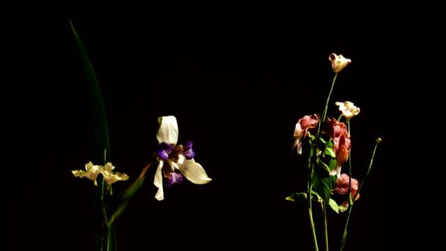 vídeos de stock, filmes e b-roll de flores murchas - morte