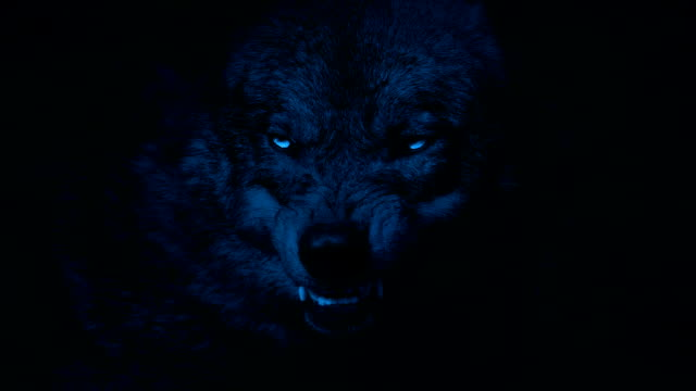 wolf growls with bright eyes in the dark - lupo video stock e b–roll