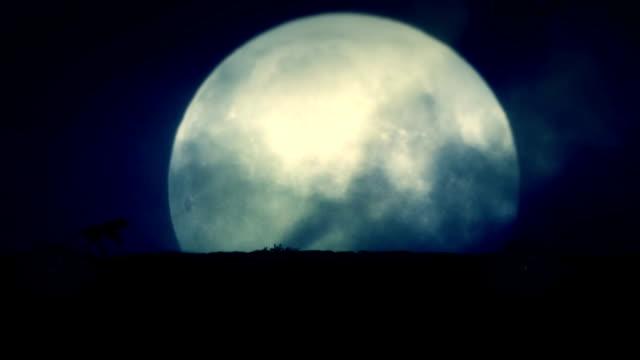 vídeos de stock e filmes b-roll de wolf running on a rising full moon night - coiote