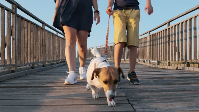 Woman and boy with Jack Russell Terrier dog walking along wooden bridge in an old fortress on mountain plateau sunset slow motion. Nature. Family on vacation. Lifestyle