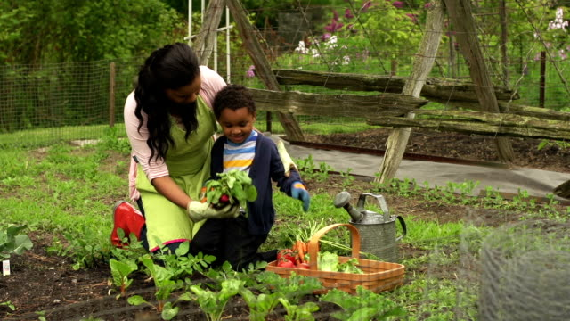 Woman and child gardening/counting radishes video