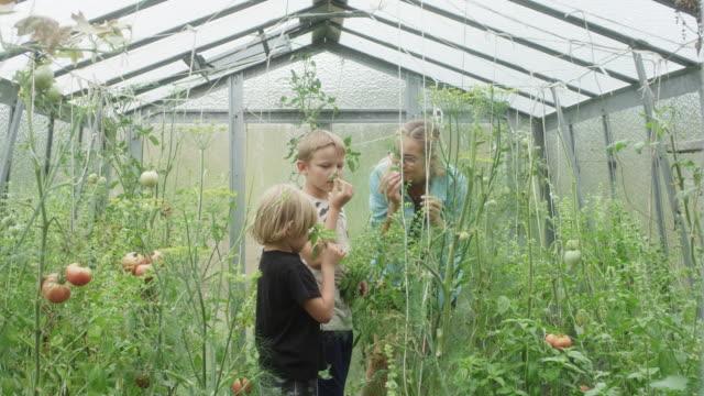 vídeos de stock e filmes b-roll de woman and children in the greenhouse. biology lesson - estufa estrutura feita pelo homem