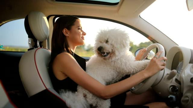 vidéos et rushes de femme et chien volant de voiture - femme seule s'enlacer