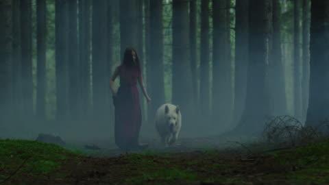 vidéos et rushes de femme et crabot dans une forêt brumeuse - imagination