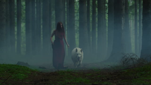 woman and dog in a misty forest - lupo video stock e b–roll