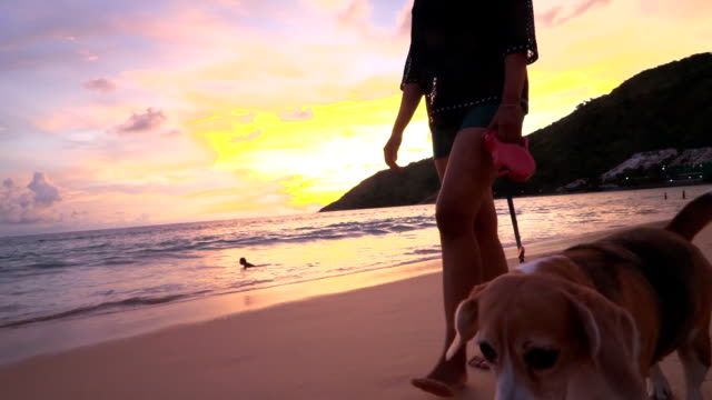 Woman and dog on the beach video