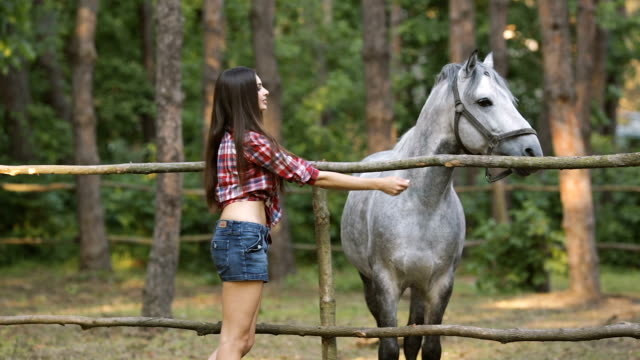 woman and horse. casual sexy style - horse stock videos and b-roll footage