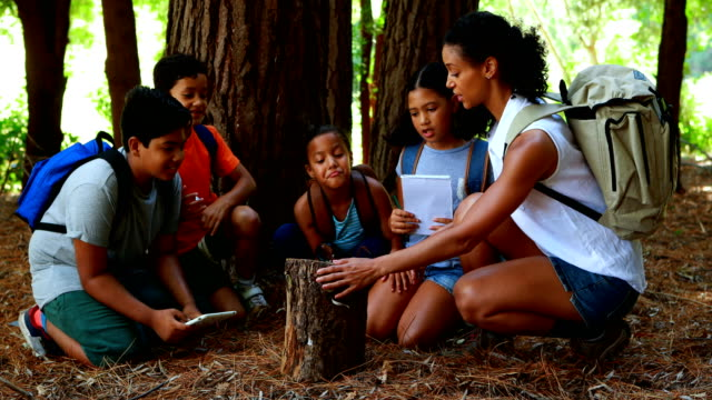 Woman and kids examining tree log in park video