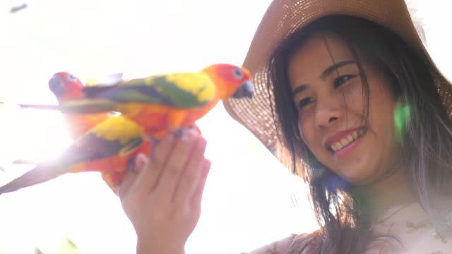 frau und papagei - zoo stock-videos und b-roll-filmmaterial