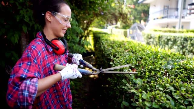 woman arranging hedge in the garden - куст стоковые видео и кадры b-roll