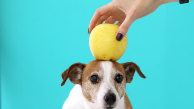 Woman balancing apple on head of dog