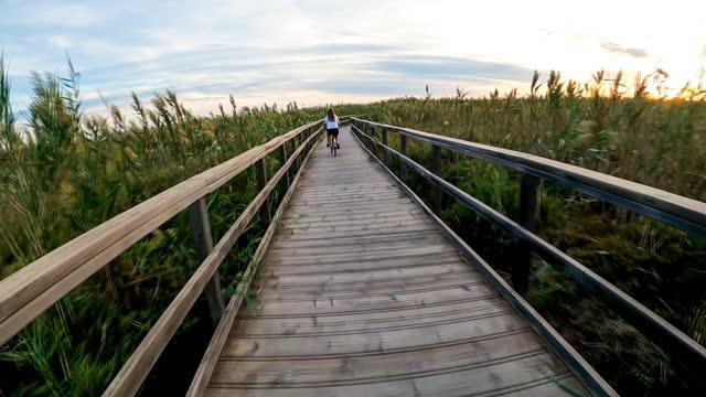 Woman biker go through boardwalk walkway of wood amidst vegetation that leads to the beach. Wooden path surrounded by sugar cane