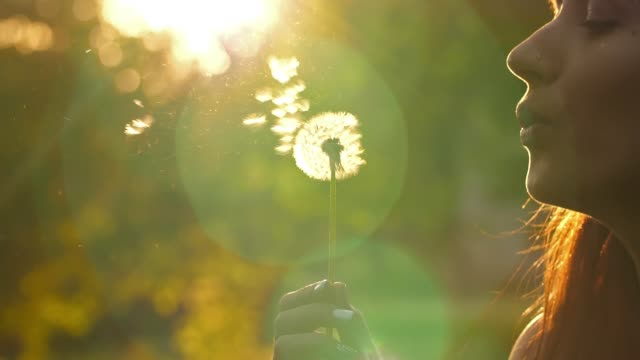 Woman Blow on a Dandelion Woman blowing dandelion seeds at sunset dandelion stock videos & royalty-free footage