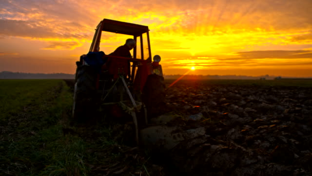 slo mo donna cultivating terra al tramonto - trattore video stock e b–roll