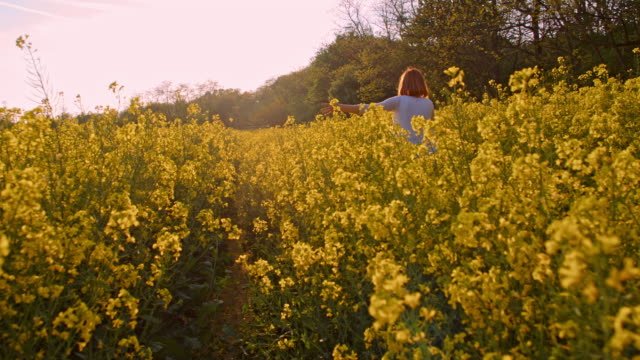 slo mo woman cycling in a canola field - colza video stock e b–roll