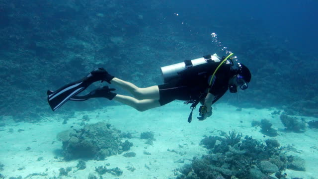 Woman Diver over Coral Reef Woman Diver over Coral Reef, red sea scuba diving stock videos & royalty-free footage