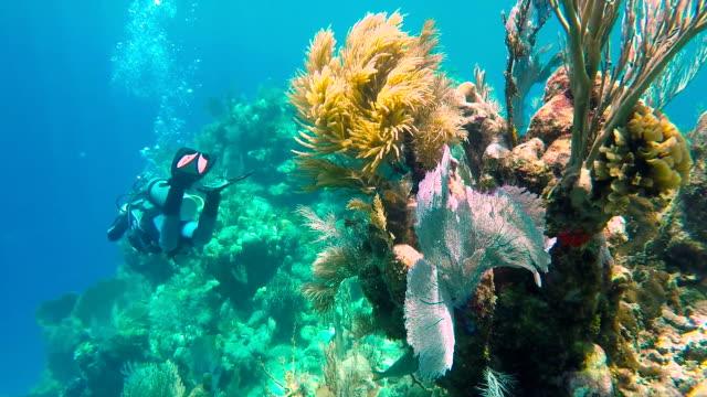 Mujer de buceo cerca del arrecife de coral - vídeo