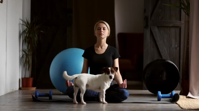 woman doing yoga at home, with a dog sitting next to her - terrier video stock e b–roll