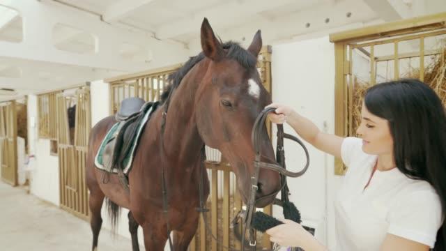 kvinna klä häst upp med träns. - häst tävling bildbanksvideor och videomaterial från bakom kulisserna