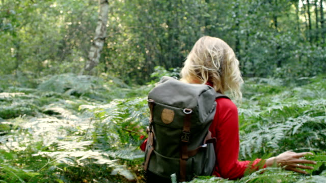 woman exploring glade with ferns in the woods - trekking video stock e b–roll