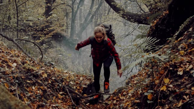 woman exploring wilderness area. autumnal forest - esploratore video stock e b–roll