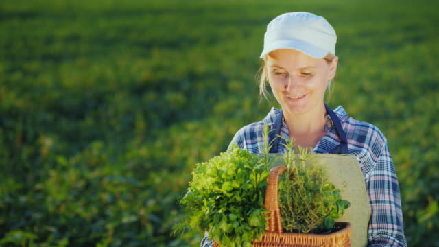 vídeos de stock e filmes b-roll de woman farmer with basket of greens and spices standing on the field - agricultora