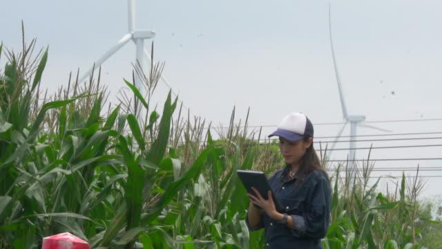Woman farmer working with the use of a digital tablet in corn farm near windmills