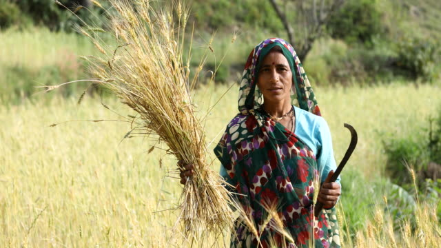 Woman farming in agricultural field Woman farming in agricultural field indian culture stock videos & royalty-free footage