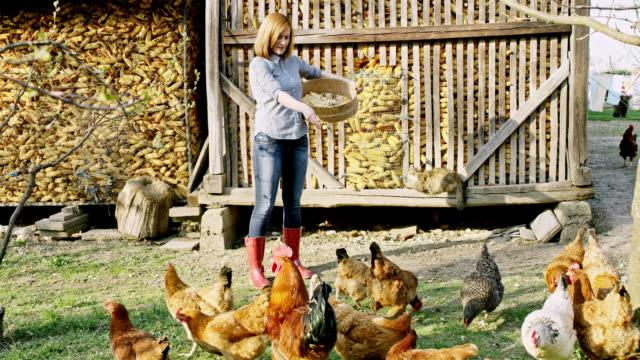 鶏の群れの餌 ws 女性 - 家畜点の映像素材/bロール