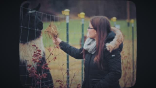 Woman feeding alpaca behind the fence