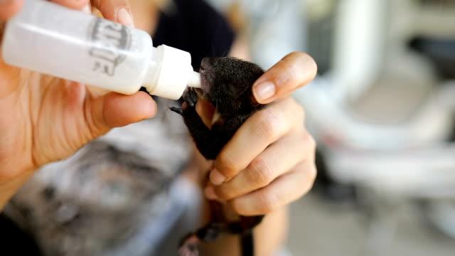 Woman feeding baby squirrel