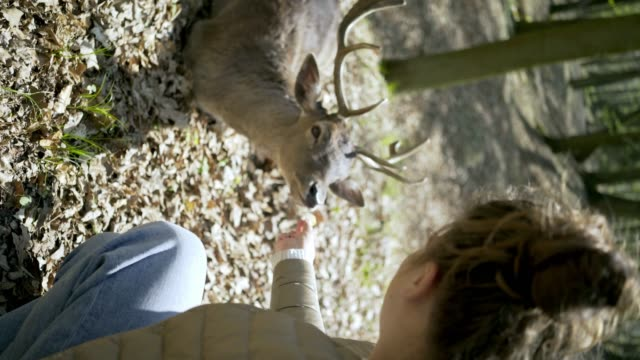 vídeos de stock e filmes b-roll de woman feeding deer from hands in spring forest - vertical