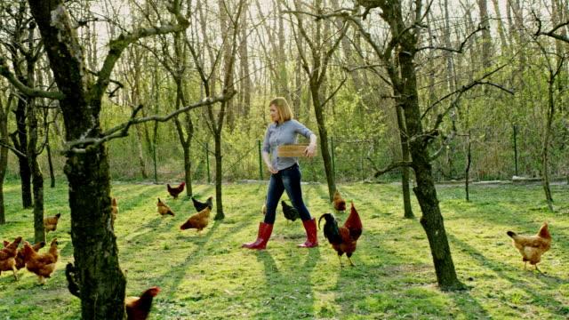 WS Woman feeding hens in the backyard