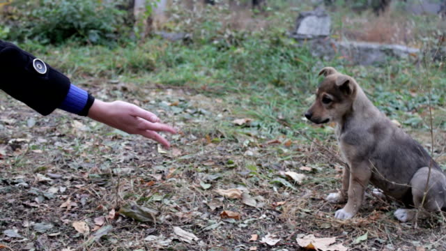 Woman feeds the homeless puppies on the street video