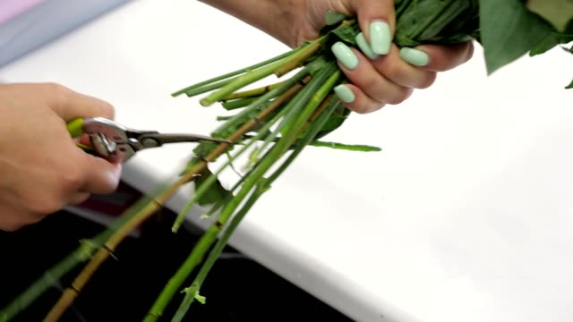 Woman florist cuts roses stems with pruner in flower shop, hands clsoeup.