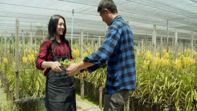 Woman gardener in orchids farm.