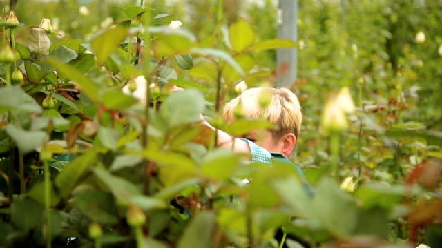 frau gärtner in der rosengarten - wissenschaftlerin stock-videos und b-roll-filmmaterial