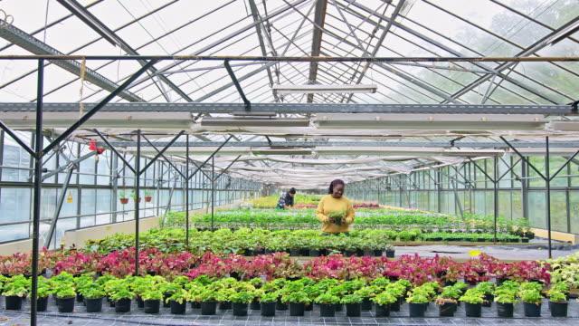 ガーデンセンターで働く女性の庭師 - environmentalism点の映像素材/bロール