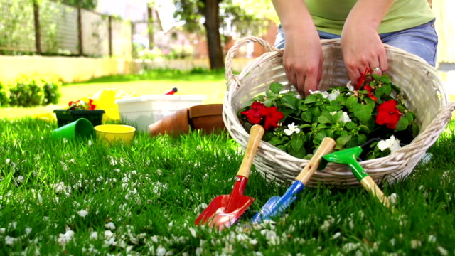 Woman Gardening Woman planting flowers into flower pots in the garden. ornamental garden stock videos & royalty-free footage