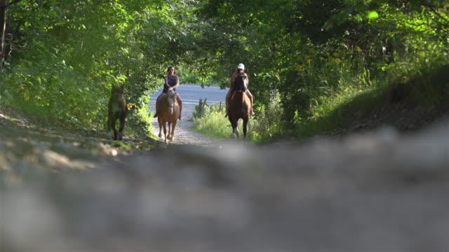 農場で犬と馬に乗って女性女の子 - 自然旅行点の映像素材/bロール