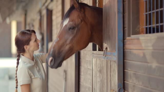 slo mo ds donna dando un cavallo un regalo per mangiare - cavallo equino video stock e b–roll