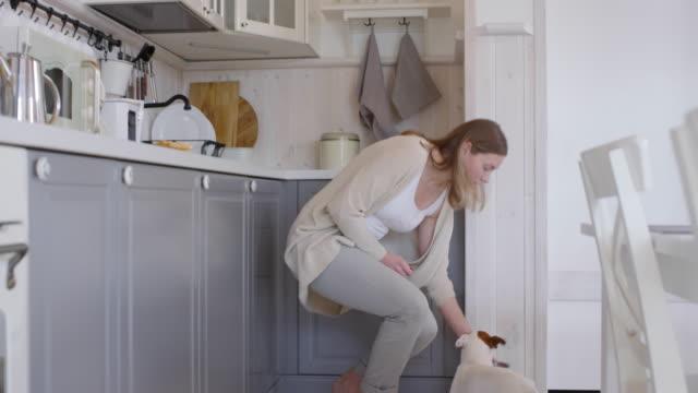 vídeos y material grabado en eventos de stock de mujer dando agua a perro en la cocina - cuenco