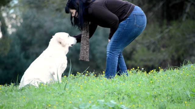 Woman going to senior dog -Labrador -sitting in grass video