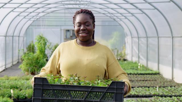 woman greenhouse worker carrying plants crate - gospodarstwo ekologiczne filmów i materiałów b-roll