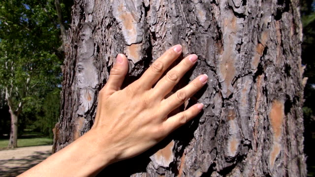 woman hand caressing tree video