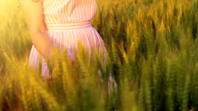 Woman Hand Caressing Wheat Field  Vintage Style Slow Motion video