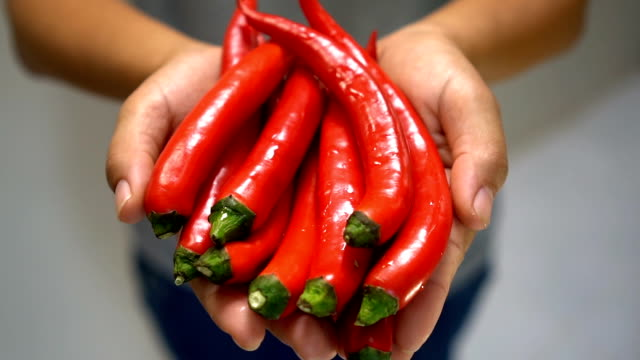 Woman hand holding Red Chili. Woman hand holding Red Chili. chili pepper stock videos & royalty-free footage